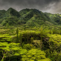 Rainforest in Oahu from a drone