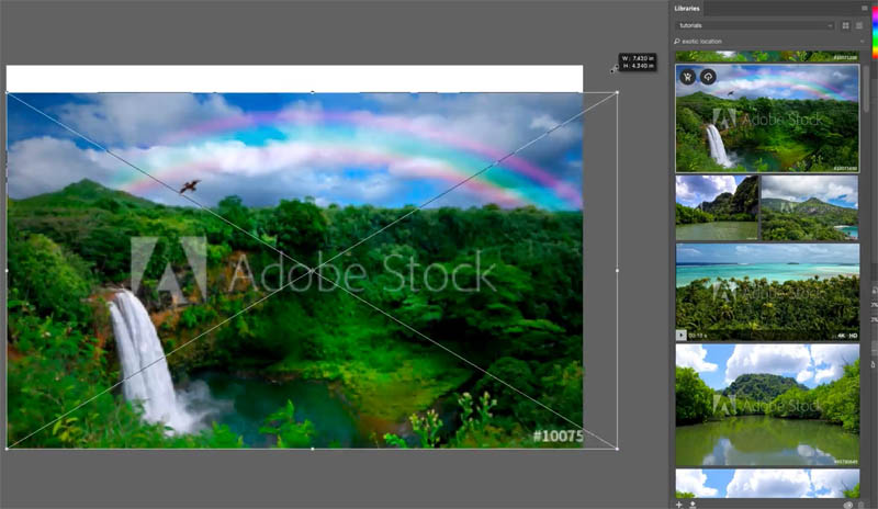 how to download adobe stock images