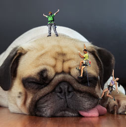 How To Make Tiny People In Photoshop Shrink Into Mini