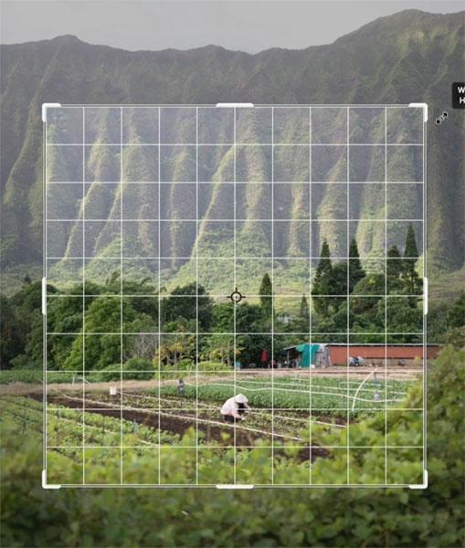 overlay in crop