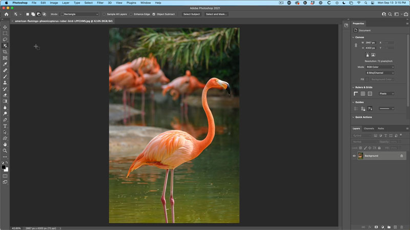 Bend anything in Photoshop with Puppet Warp. Free tutorial